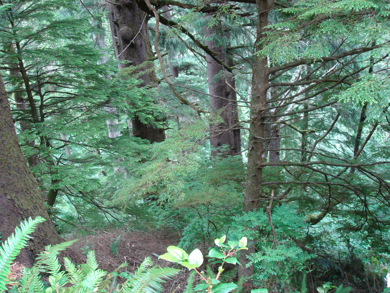 coast_forest_dsc00012.jpg